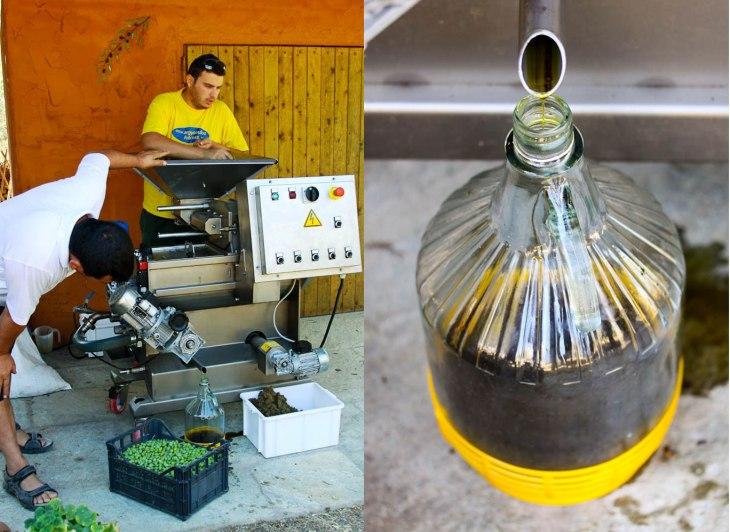 Makingh-Olive-Oil